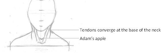 Position of the Adam's Apple