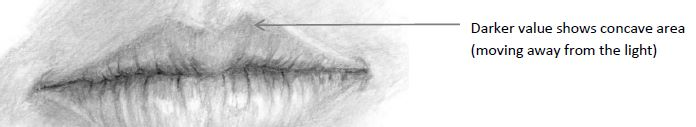 Upper lip with concave area marked