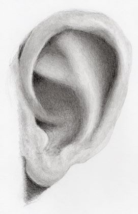Completed Ear drawing