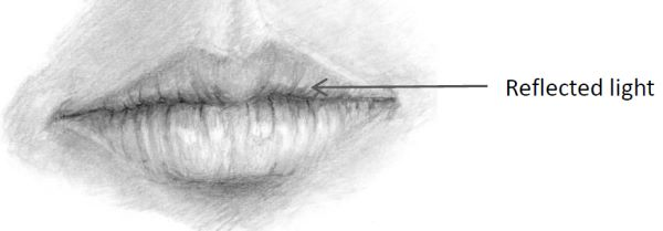 Mouth drawing showing reflected light