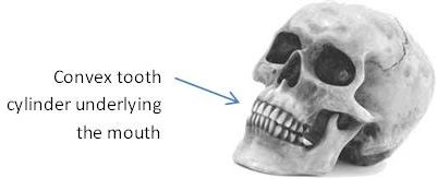 Skull showing mouth and teeth