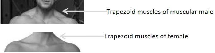 Male and female trapezoids