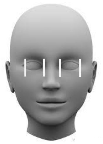 Vertical positioning of the eyes