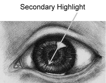 Iris secondary highlight
