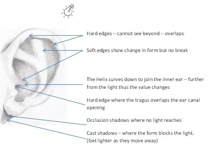 Ear drawing tips