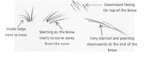 Eyebrow pencil strokes