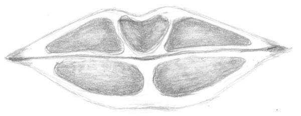 Mouth anatomy - fatty cushions