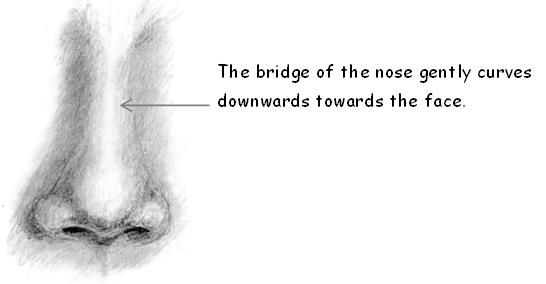 Drawing the bridge of the nose