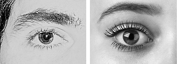Male and female eyebrow examples